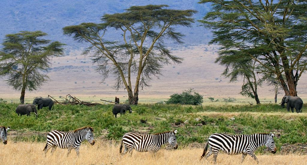 serengeti-trabalho-voluntario-na-africa