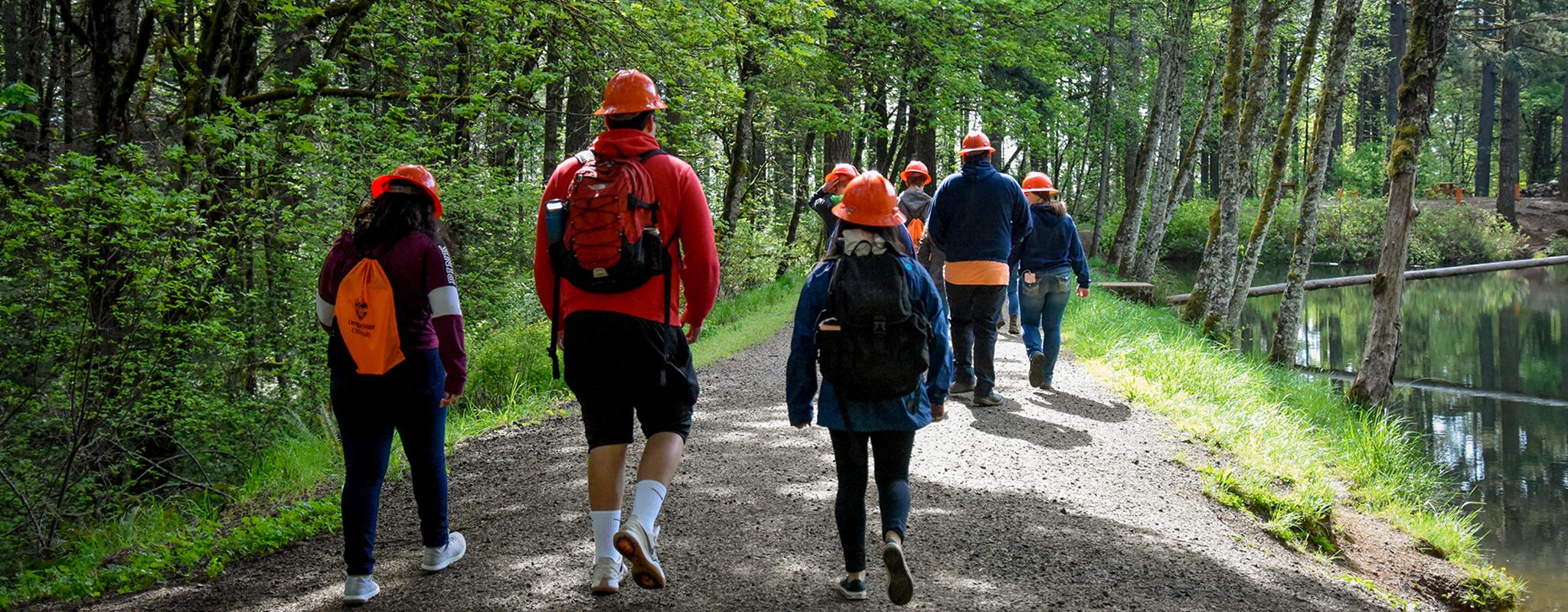8 programas de mestrado para engenheiros florestais na Europa