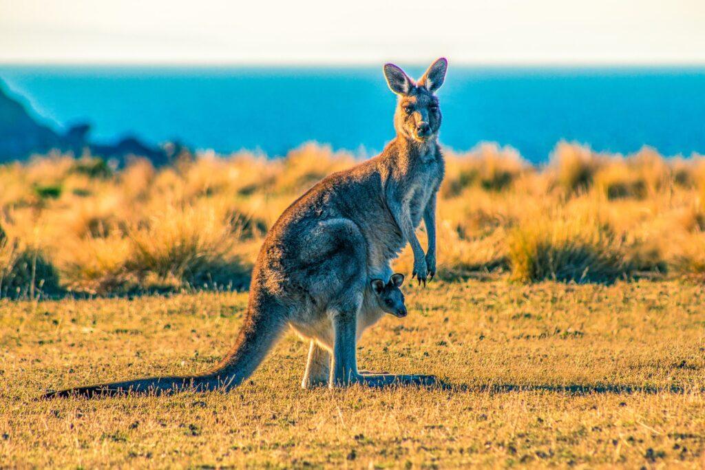 3-fatos-sobre-a-australia