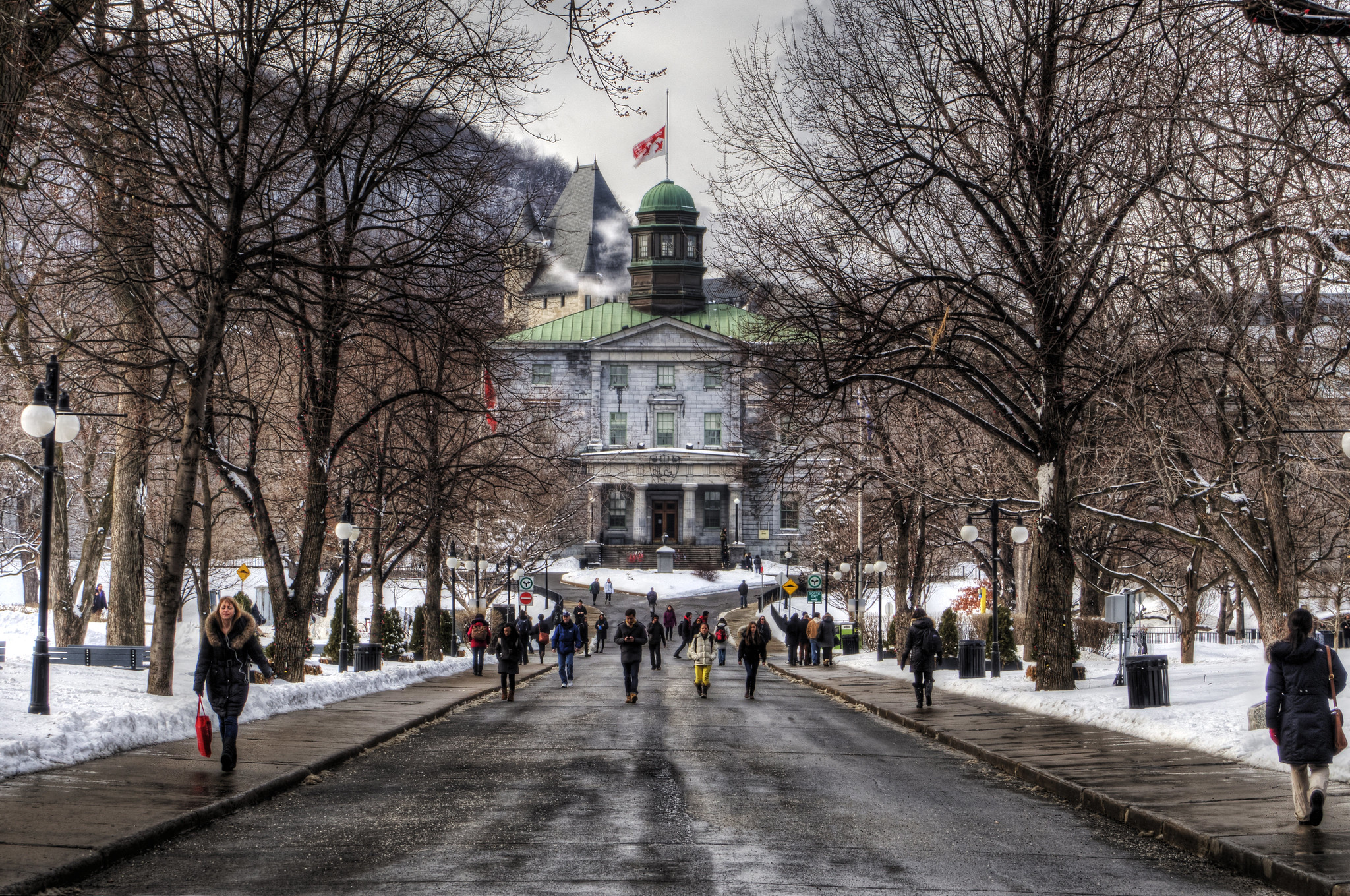 3 cursos online da Universidade McGill gratuitos