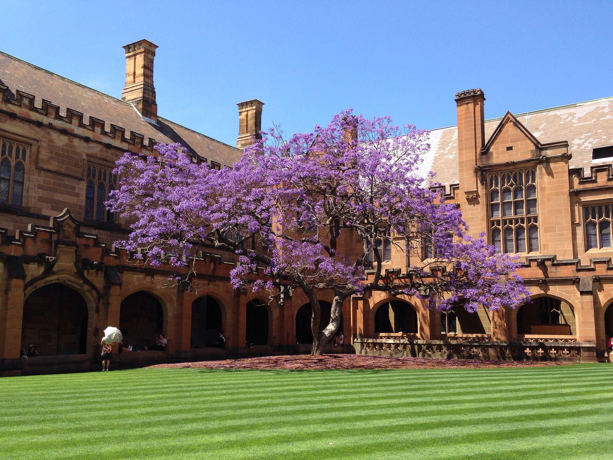 3 tipos de bolsas de graduação na Universidade de Sydney