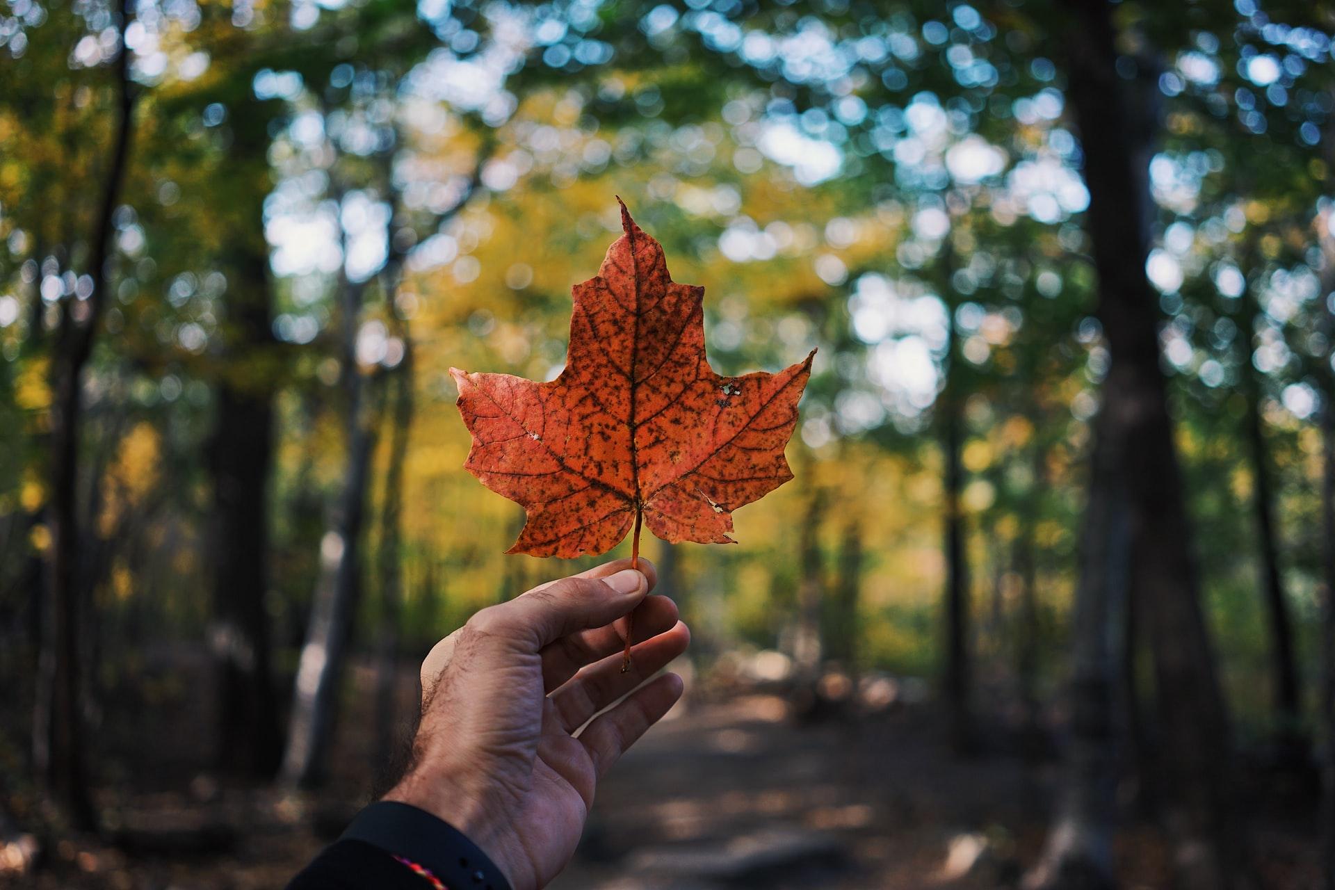 Guia: como fazer doutorado no Canadá?