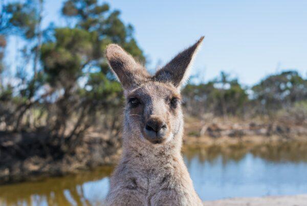 2-viajar-sozinho-na-australia